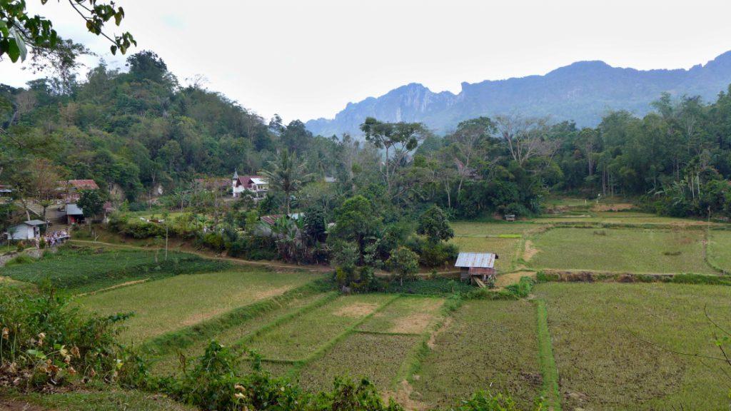 Indonesien Zweitheimat Reisfelder