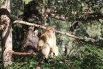 Marokko Tiere Affe