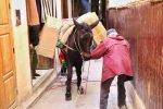 Marokko Tiere Esel