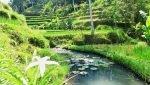 Bali Highlights Jatiluwih