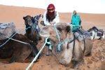 Marokko Tiere Kamel