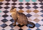 Marokko Tiere Katze