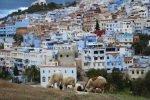Marokko Tiere schafe