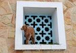 Marokko Tiere Ziege