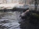 Ausflüge von San Francisco Monterey Bay Aquarium