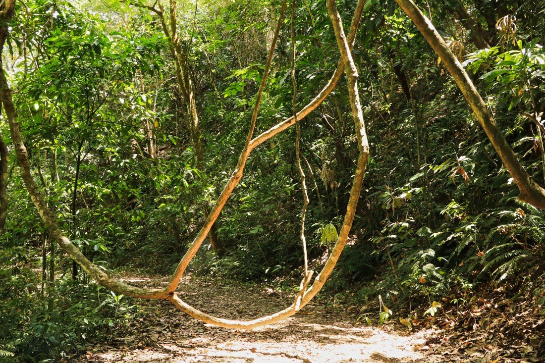 Backpacking in Panama Backpacking Wald