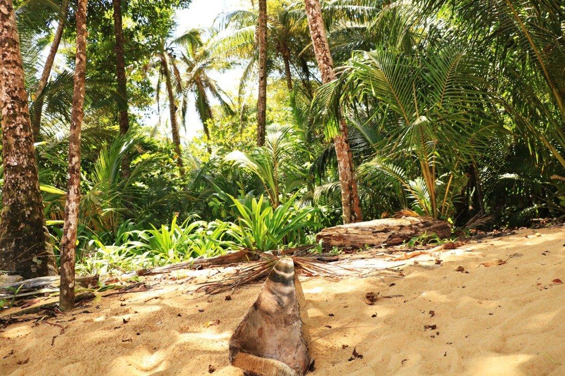 Isla Colon Panama Bocas del Toro