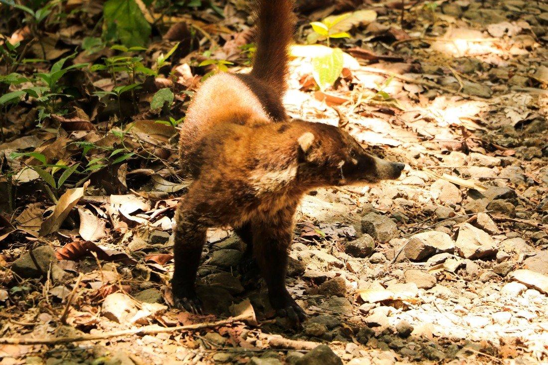 Soberania Nationalpark Panama Tiere