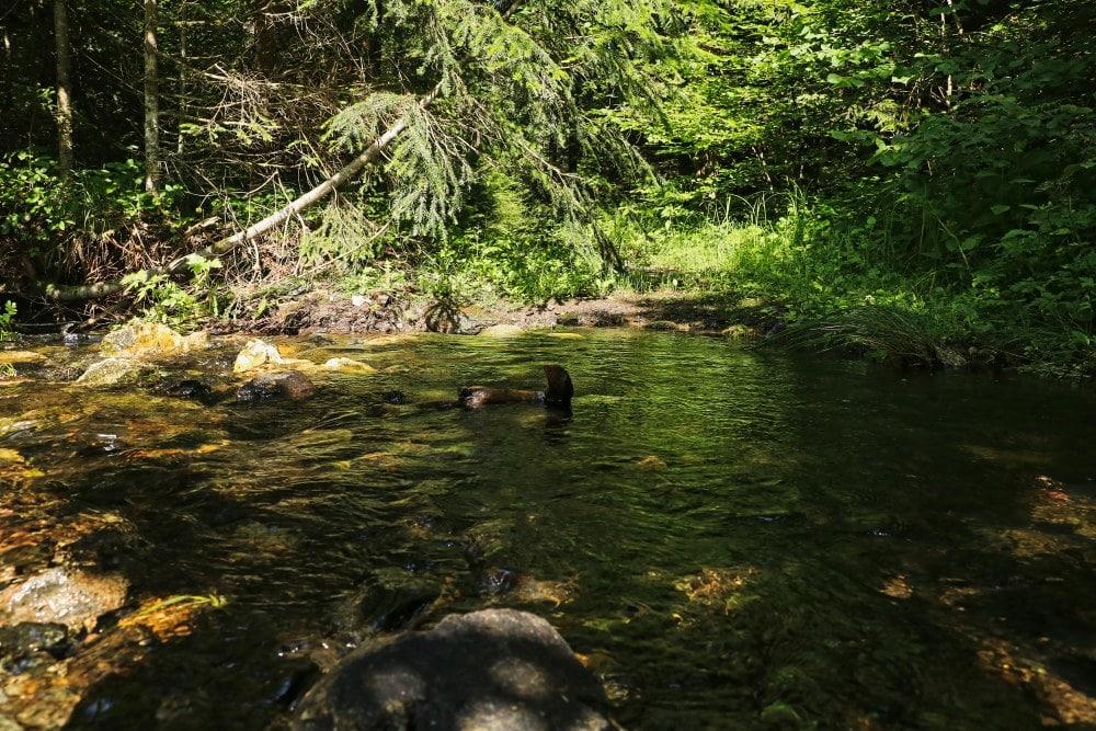 Tara Nationalpark Fluss